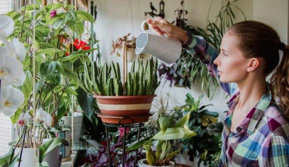 Bitkiler ve Mental Sağlık