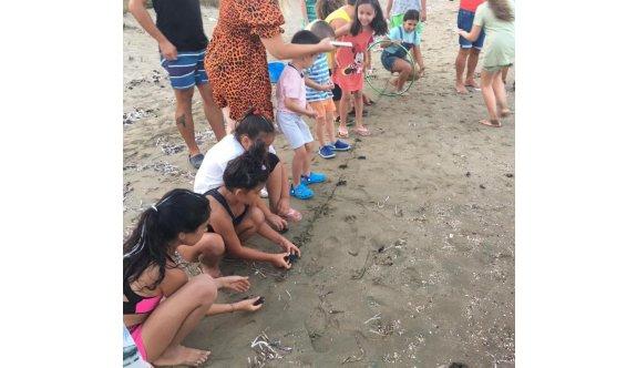 DAÜ SAGM 12 binden fazla deniz kaplumbağası yavrusunun denizle buluşturdu