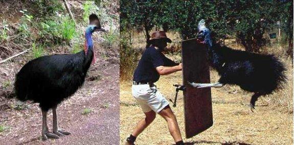 Dünyanın en tehlikeli kuşu