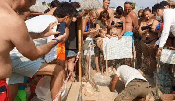 Onlarca caretta caretta yavrusu kurtarıldı