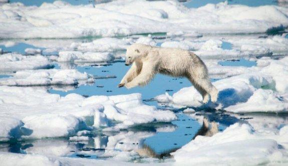 Arktik Deniz Buzu son 40 yılda yüzde 50 oranında eridi