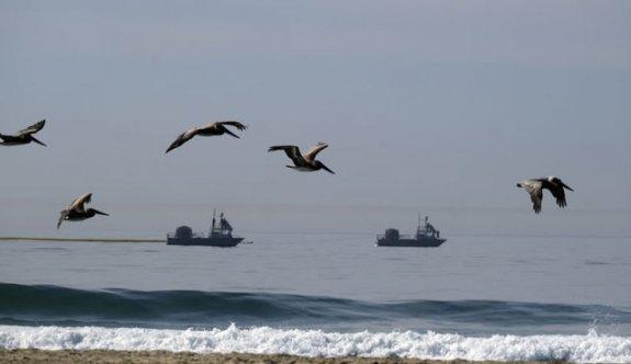 California'da çevre felaketi: Sahil petrolle kapland