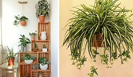 İyi Bir Uyku İçin Odanıza Koyabileceğiniz 10 Güzel Bitki