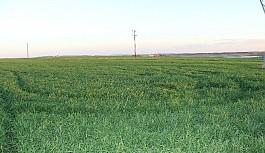 Genel Tarım Sigortası Fonu'ndan üreticilere beyan çağrısı