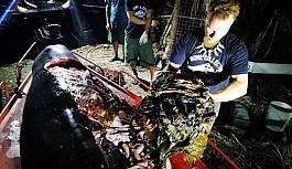 Ölü balinanın midesinden 40 kg plastik çıktı
