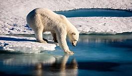 Kuzey Kutbu alarm veriyor