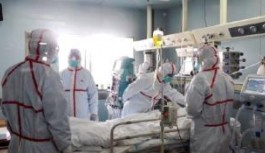Çin'de kuş gribinden 79 kişi öldü