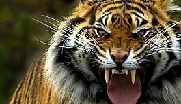 Vahşi hayvanlar 79 kişiyi öldürdü
