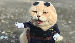 'Balıkçı kedi' bu kez polis...