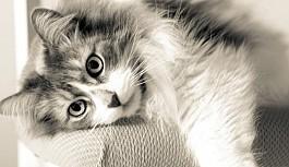 Kedilerin İnsanlardan Daha Üstün Olduklarını...