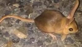 Dünyanın en ilginç 19 hayvanından biri