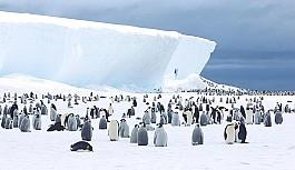 Antarktika'da buz tabakası parçalandı,...