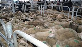 Hastalıklı hayvan sayısı endişe verici
