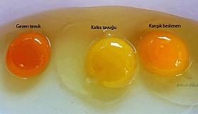 Hangi yumurta daha sağlıklı?