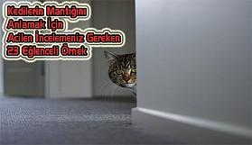 Kedi Mantığı