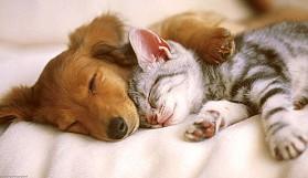 Kedisever ve köpekseverler arasındaki 10 fark