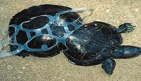 Plastik atıkların pençesindeki canlılar