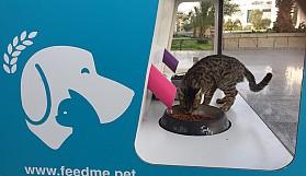 Yakın Doğu Üniversitesi, sokak hayvanlarını unutmadı