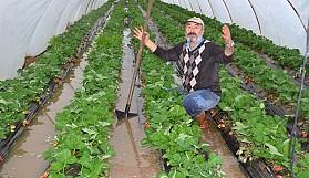 Antalya'da tarım alanları sular altında