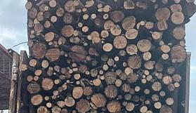Bu ağaç kütükleri nereden toplandı?